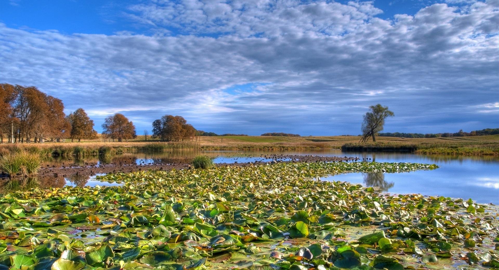 Lily Pads wallpapers HD quality