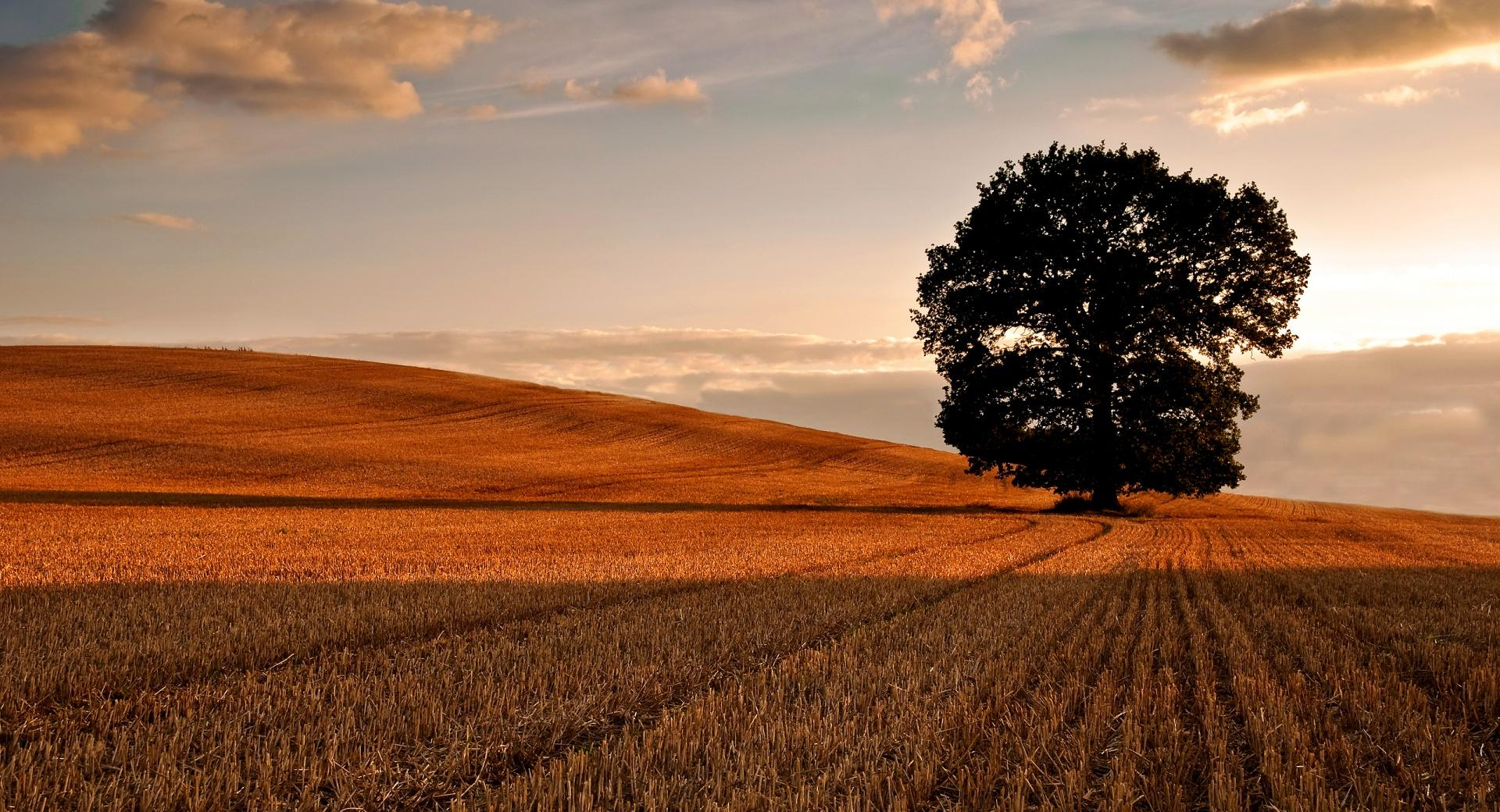 Lone Tree In Field, Autumn wallpapers HD quality