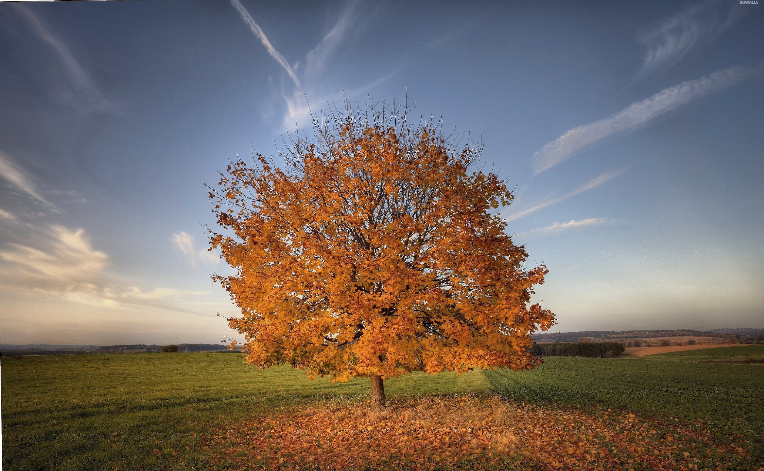 Lonesome autumn tree losing its leaves on the field at 1600 x 1200 size wallpapers HD quality