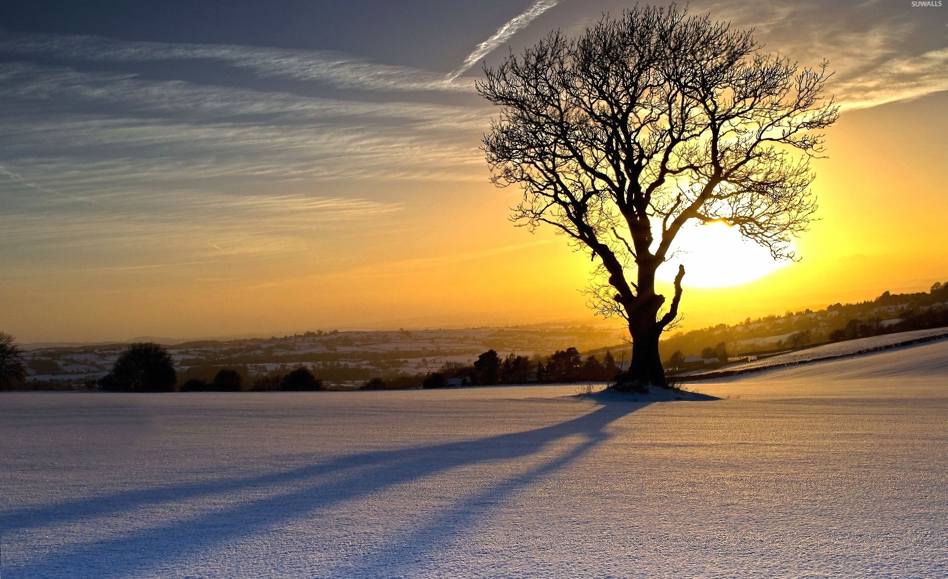 Lonesome tree shadowing on the snow wallpapers HD quality