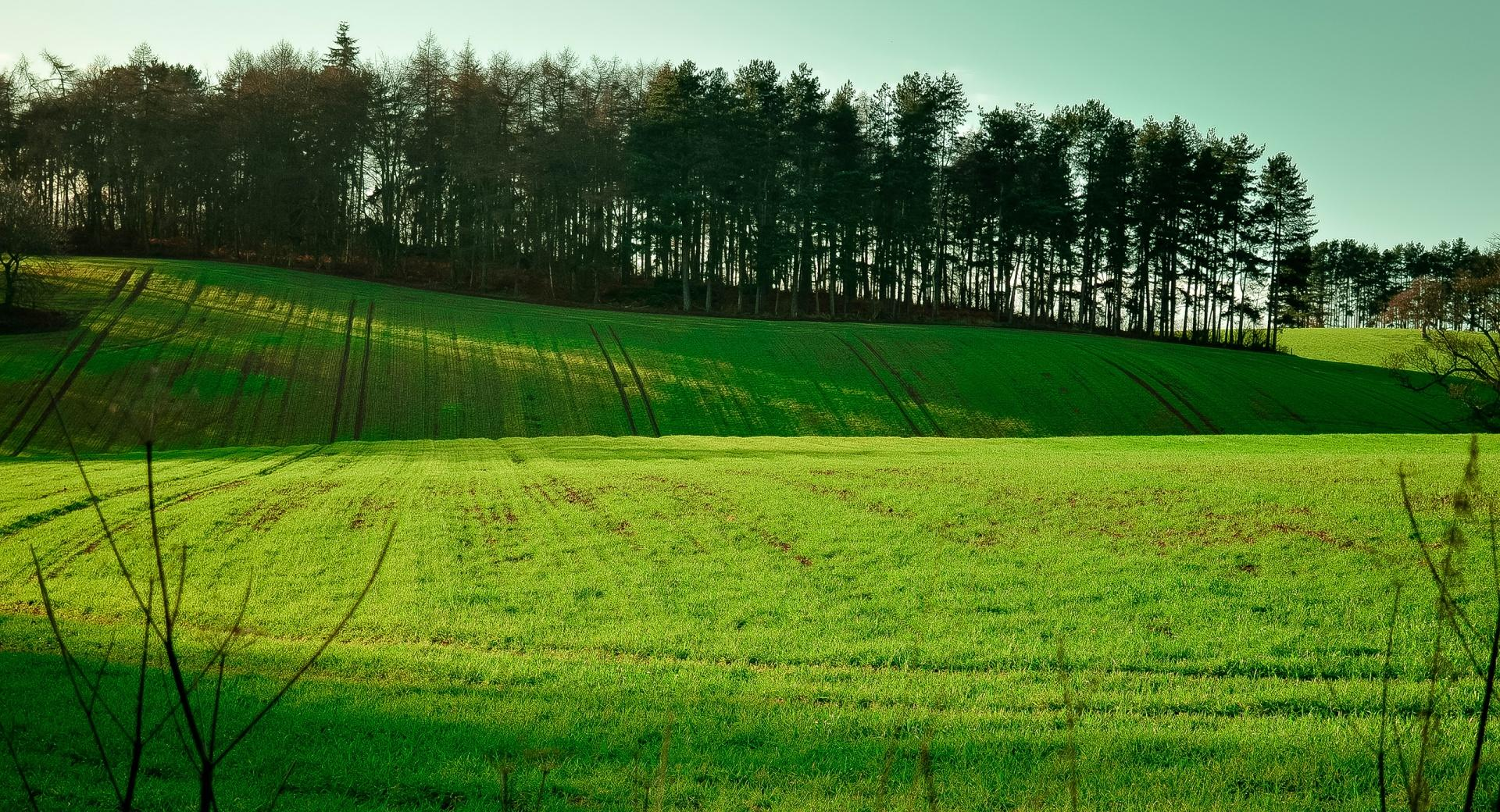 Long Exposure Field wallpapers HD quality