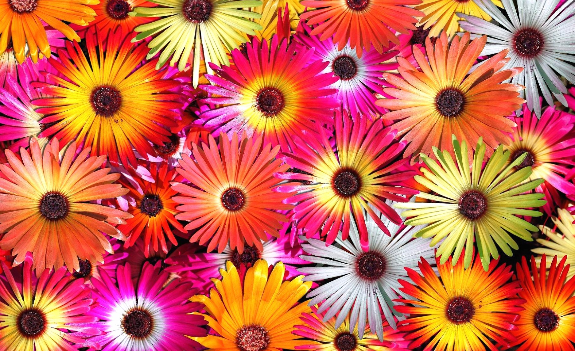 many flowers hot colours wallpapers HD quality