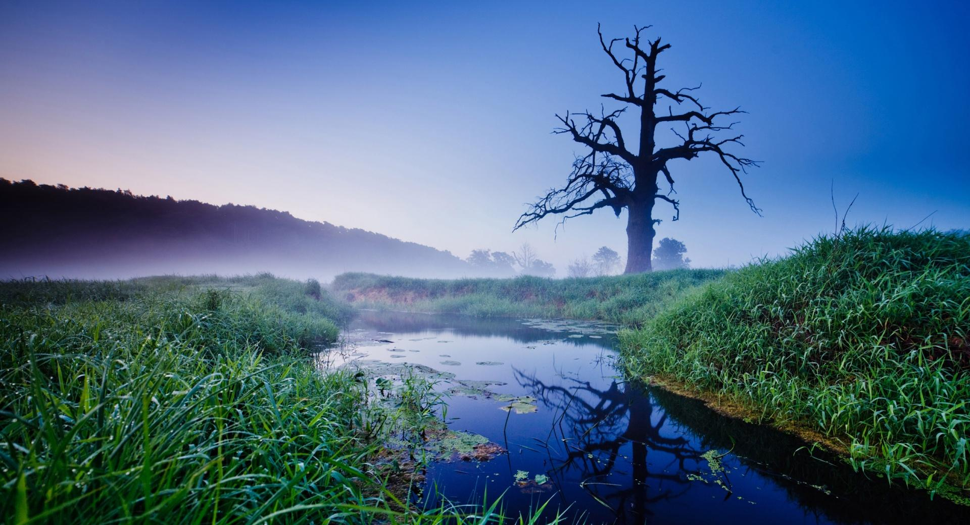 Misty Morning wallpapers HD quality