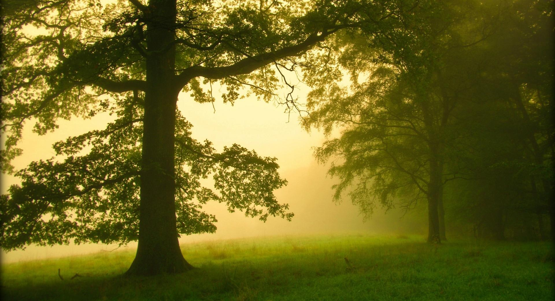 Morning Mist at 1152 x 864 size wallpapers HD quality
