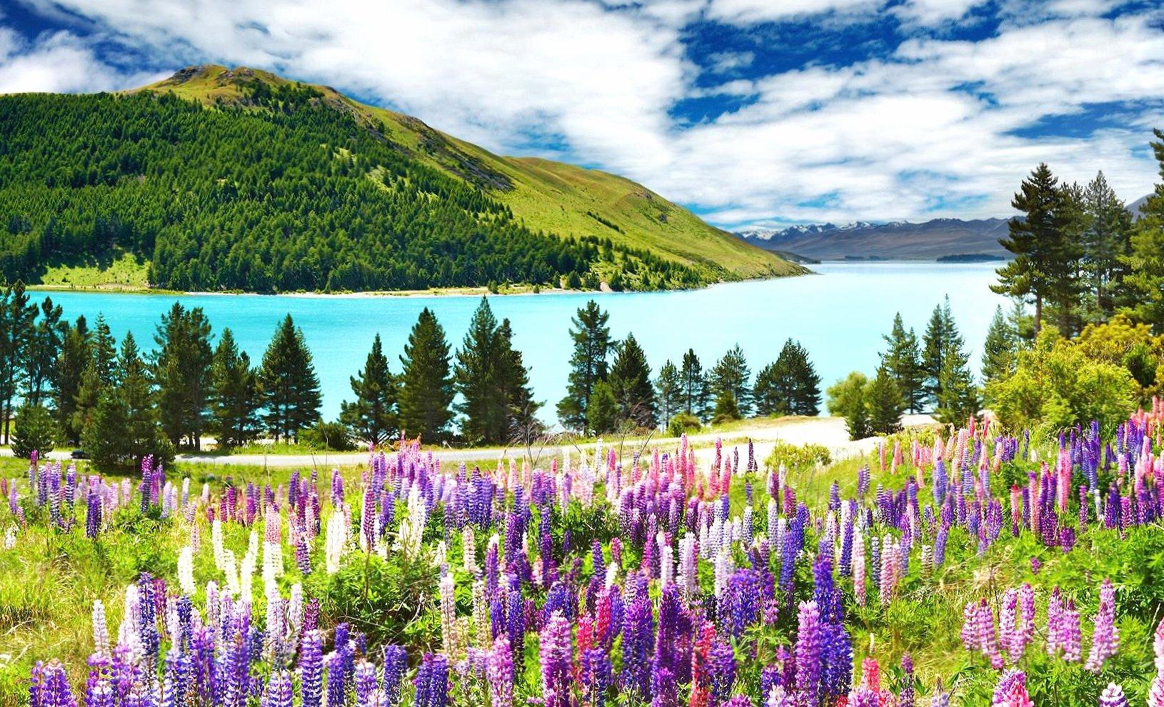 Mountain lake lavender wallpapers HD quality