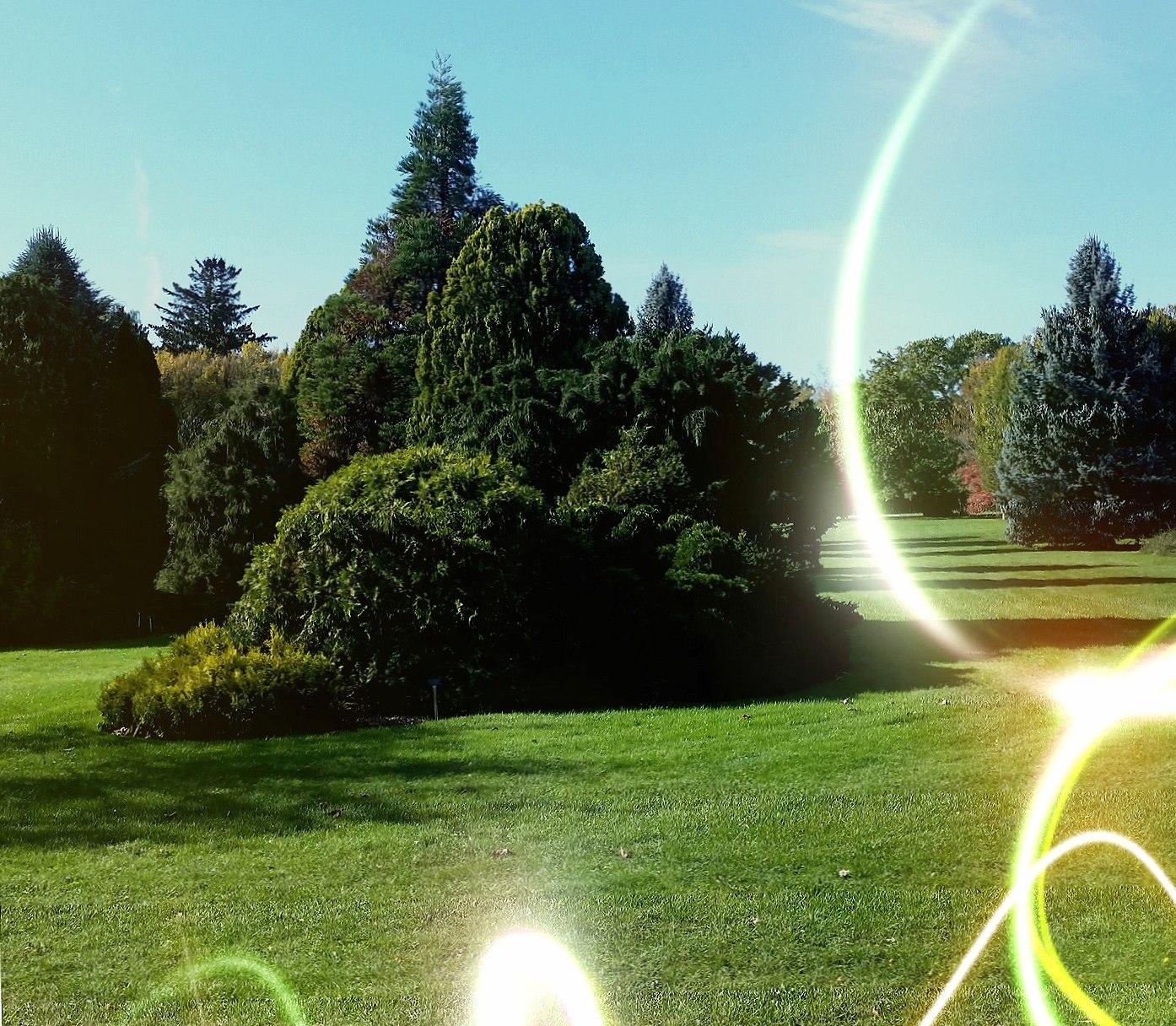 Niagara Parks Tree wallpapers HD quality