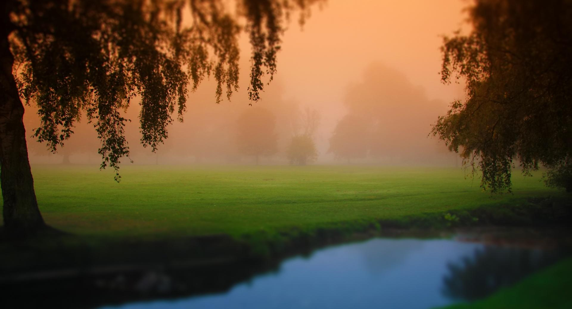 Park Morning Fog wallpapers HD quality