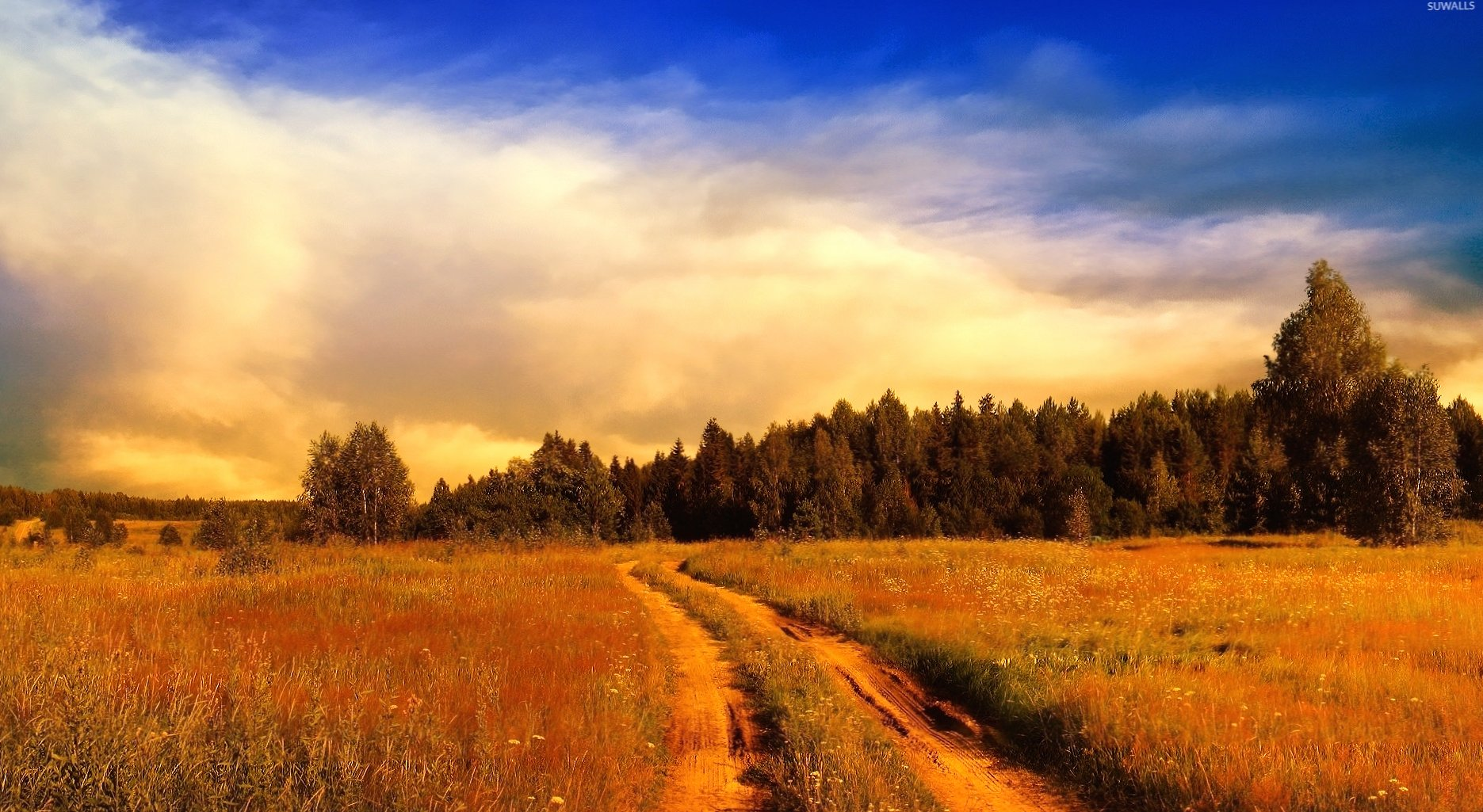 Path on the rusty field towards the forest wallpapers HD quality