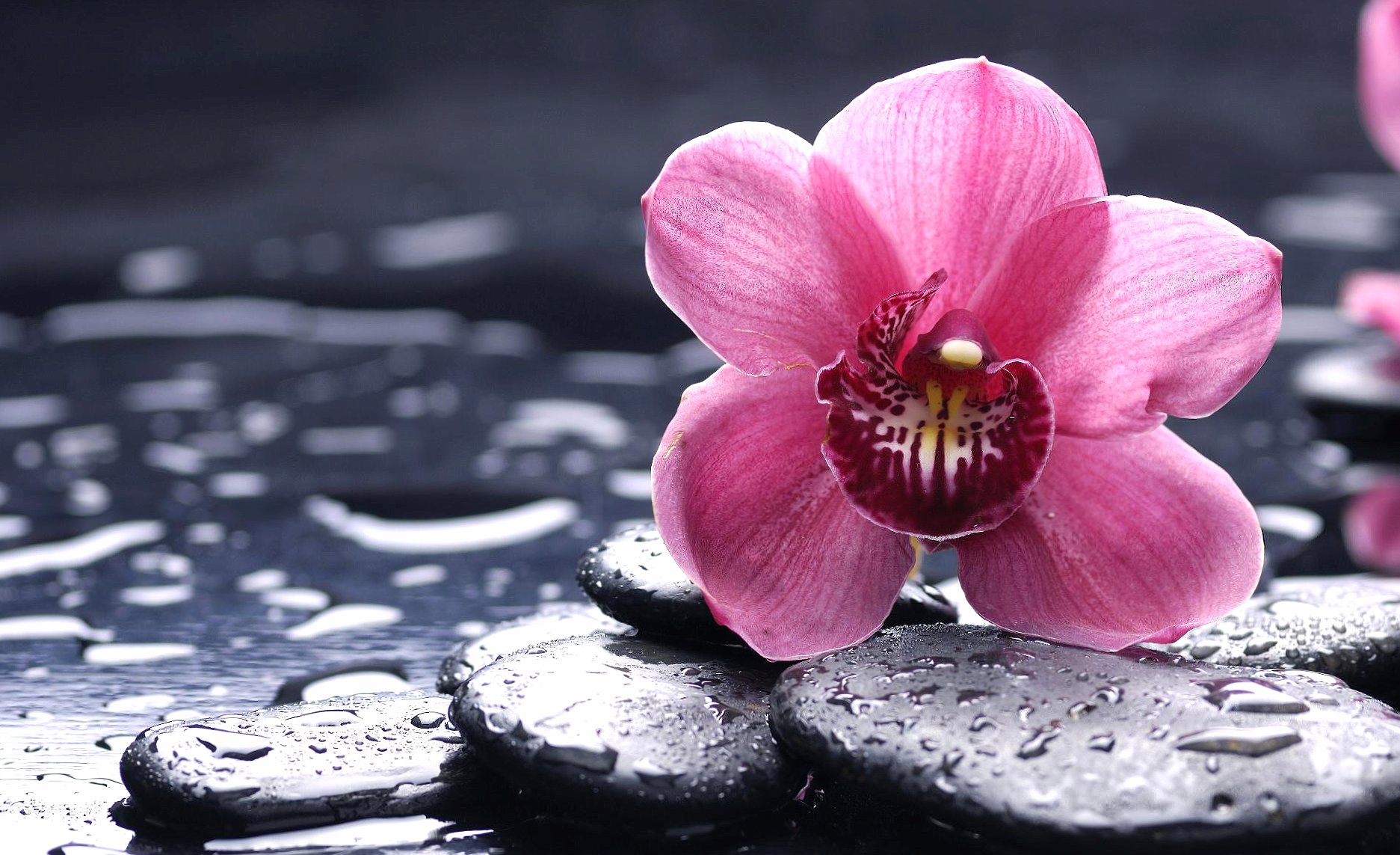 Pink flower and stones wallpapers HD quality