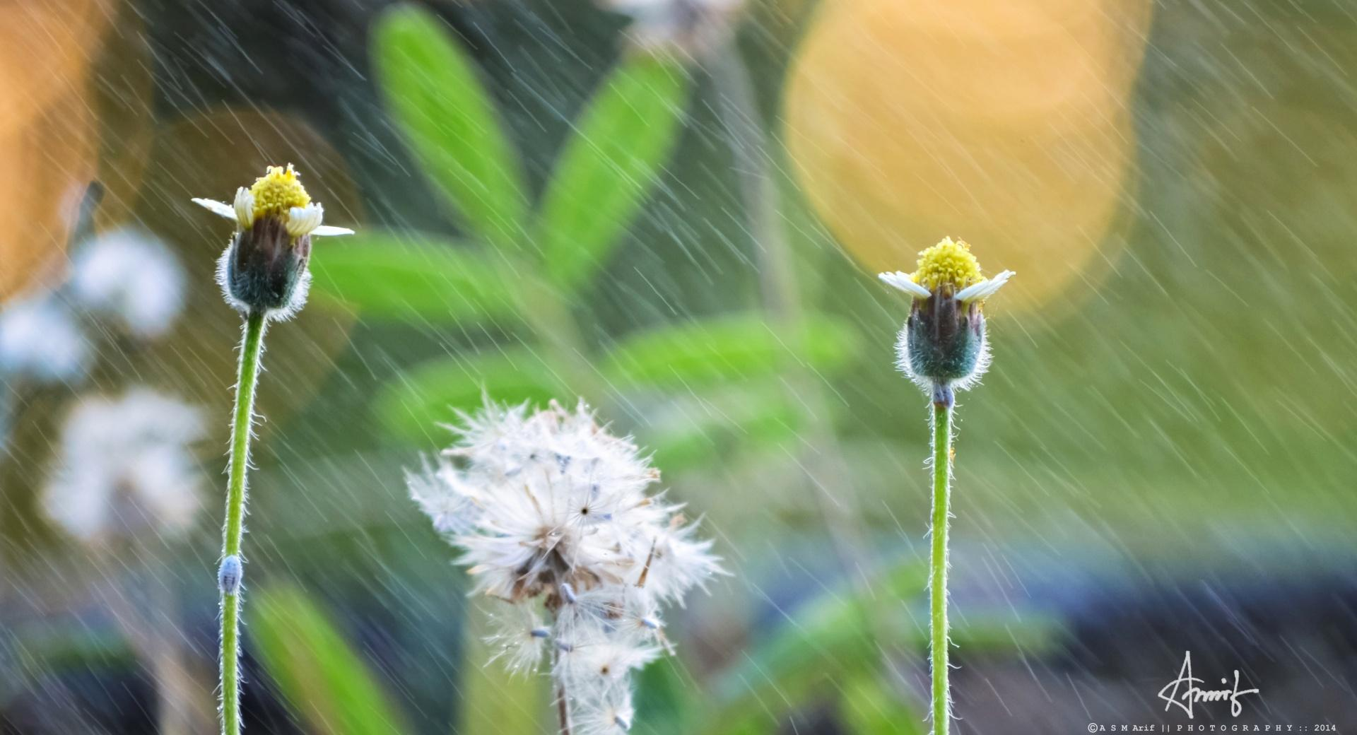 Rain Flower wallpapers HD quality