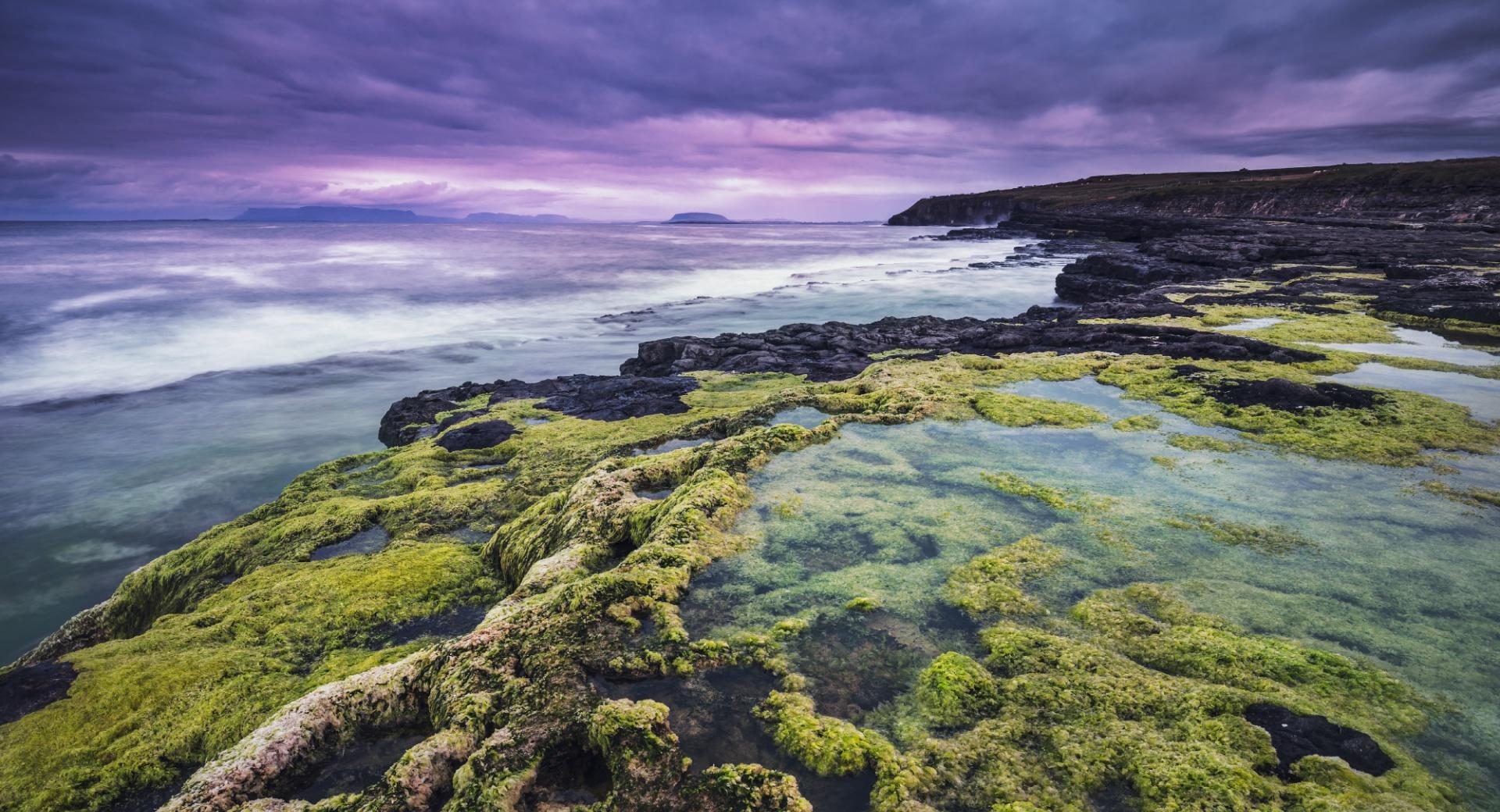 Rocks and Algae wallpapers HD quality