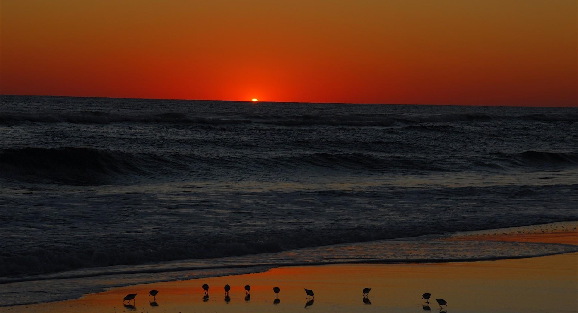 Seagulls On Beach At Sunset wallpapers HD quality