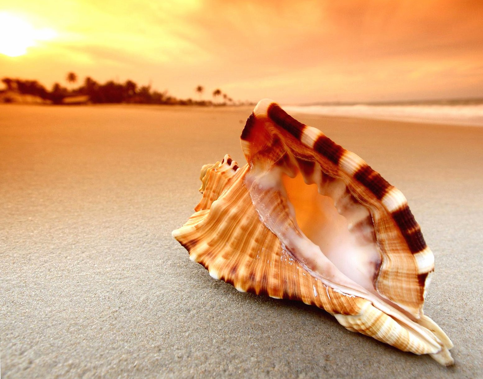 shell at sunset wallpapers HD quality