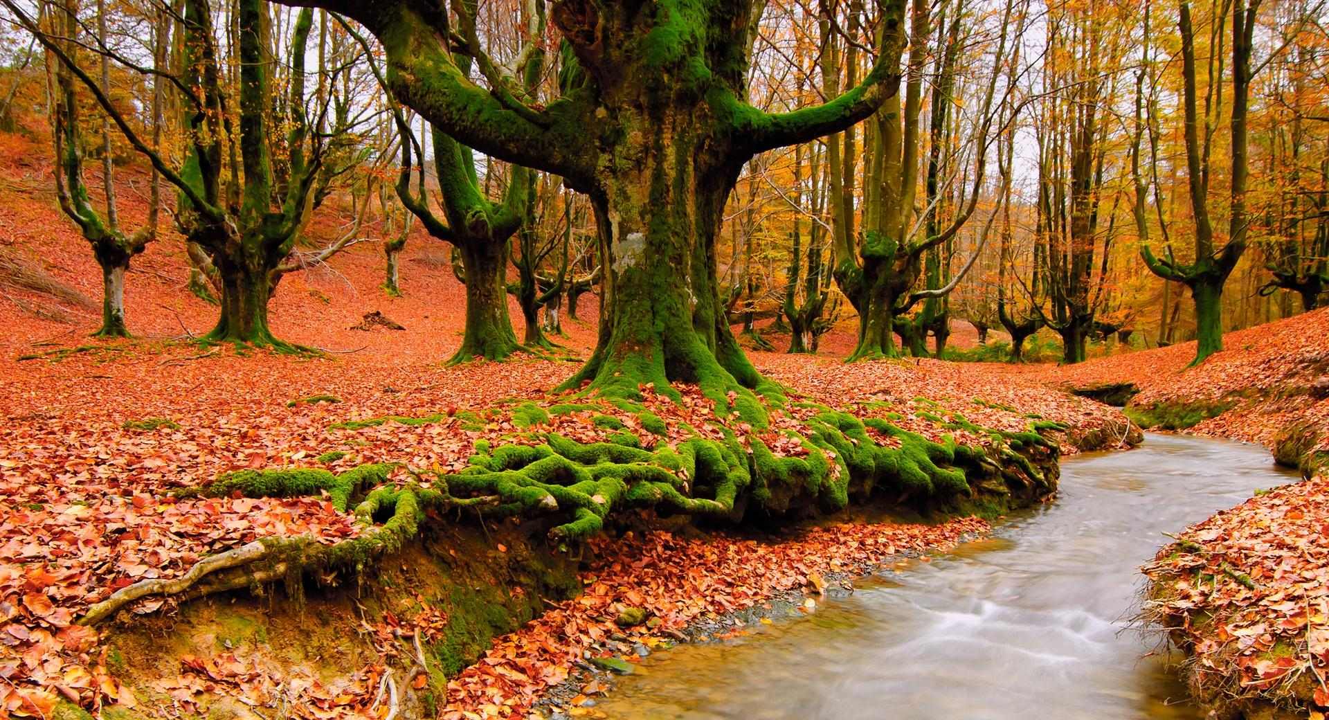 Strange Forest Autumn wallpapers HD quality