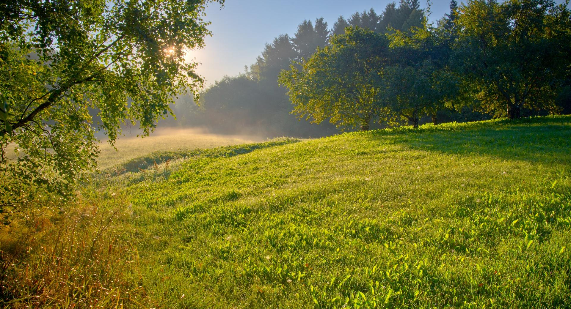 Summer Morning wallpapers HD quality