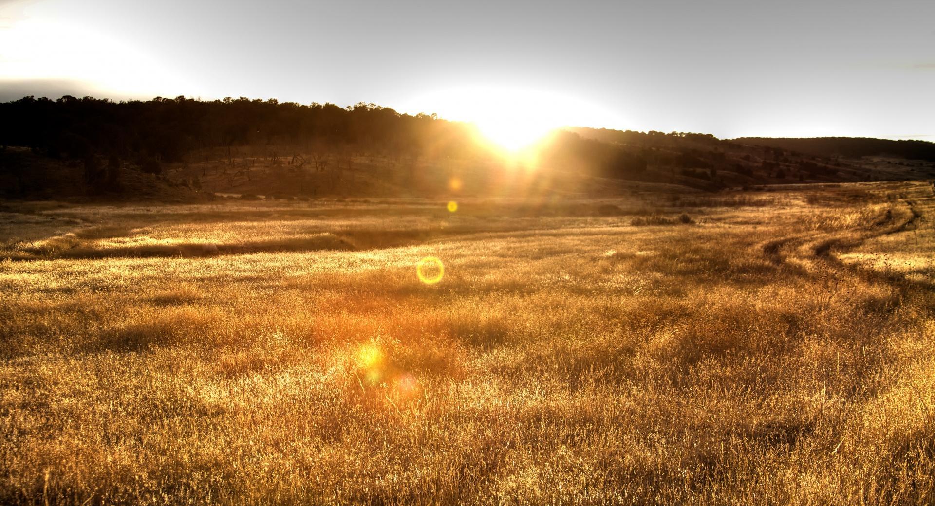 Sun Backlit Grain wallpapers HD quality