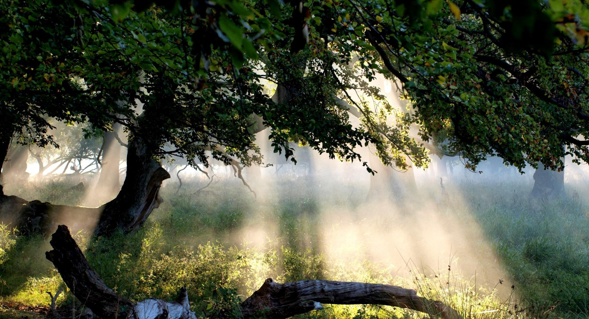 Sunlight Through Tree wallpapers HD quality