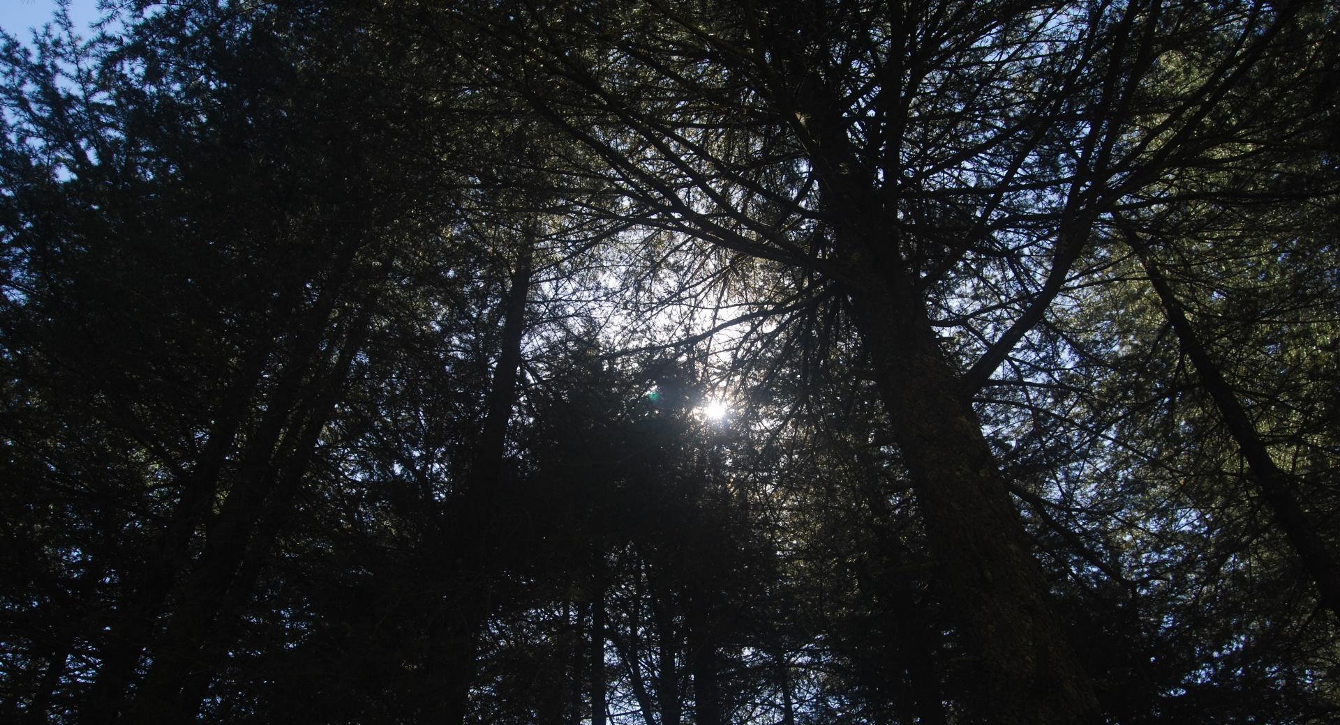 Suns Rays Thru Shades wallpapers HD quality