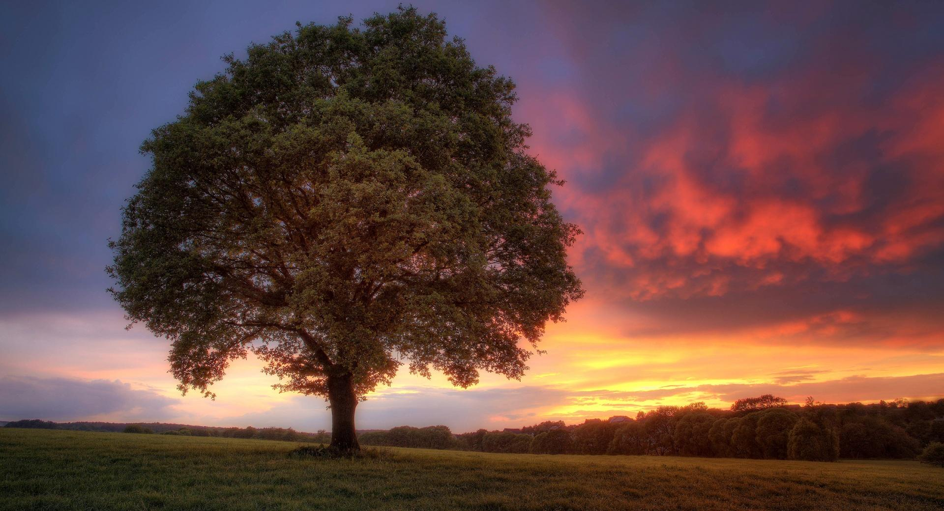 Sunset Tree wallpapers HD quality