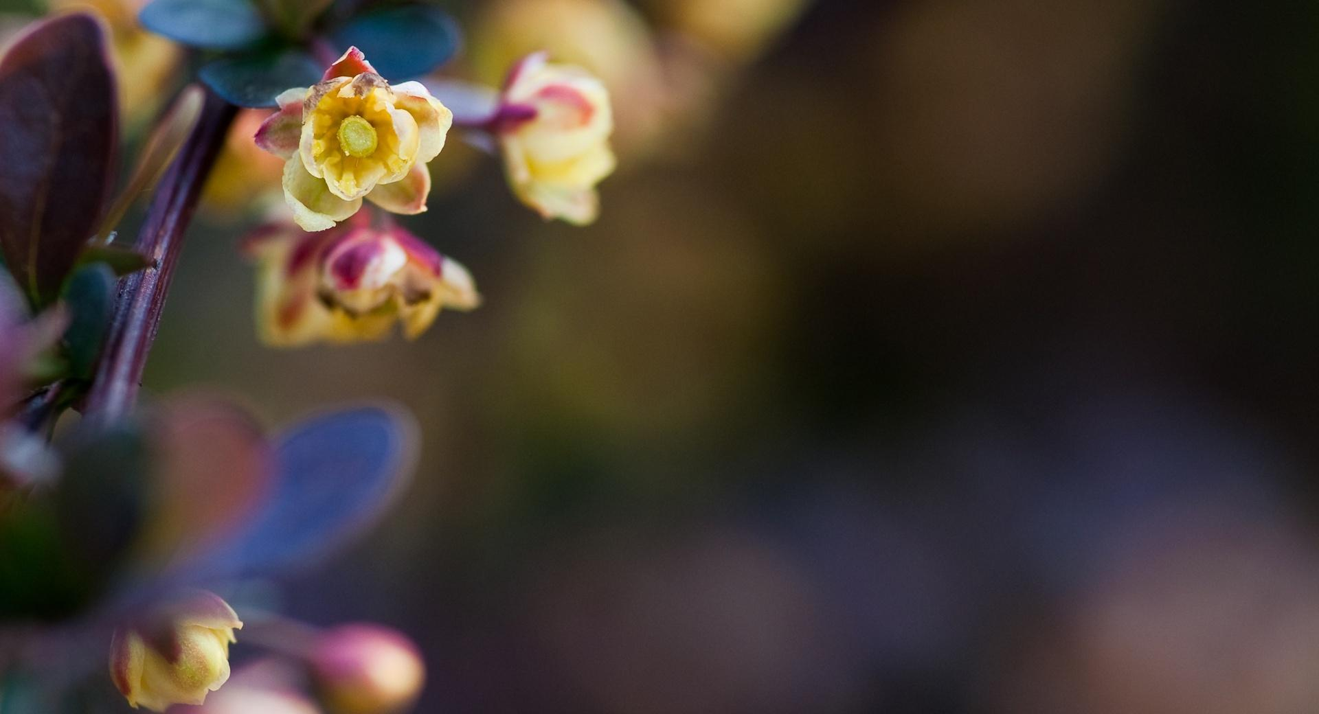 Tiny Flowers Macro at 640 x 960 iPhone 4 size wallpapers HD quality