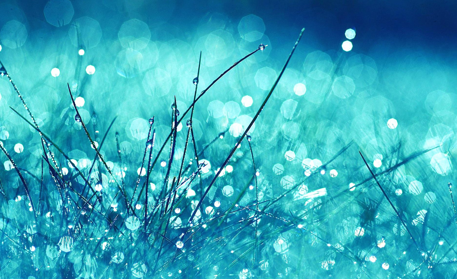 Water drops in grass abstract wallpapers HD quality