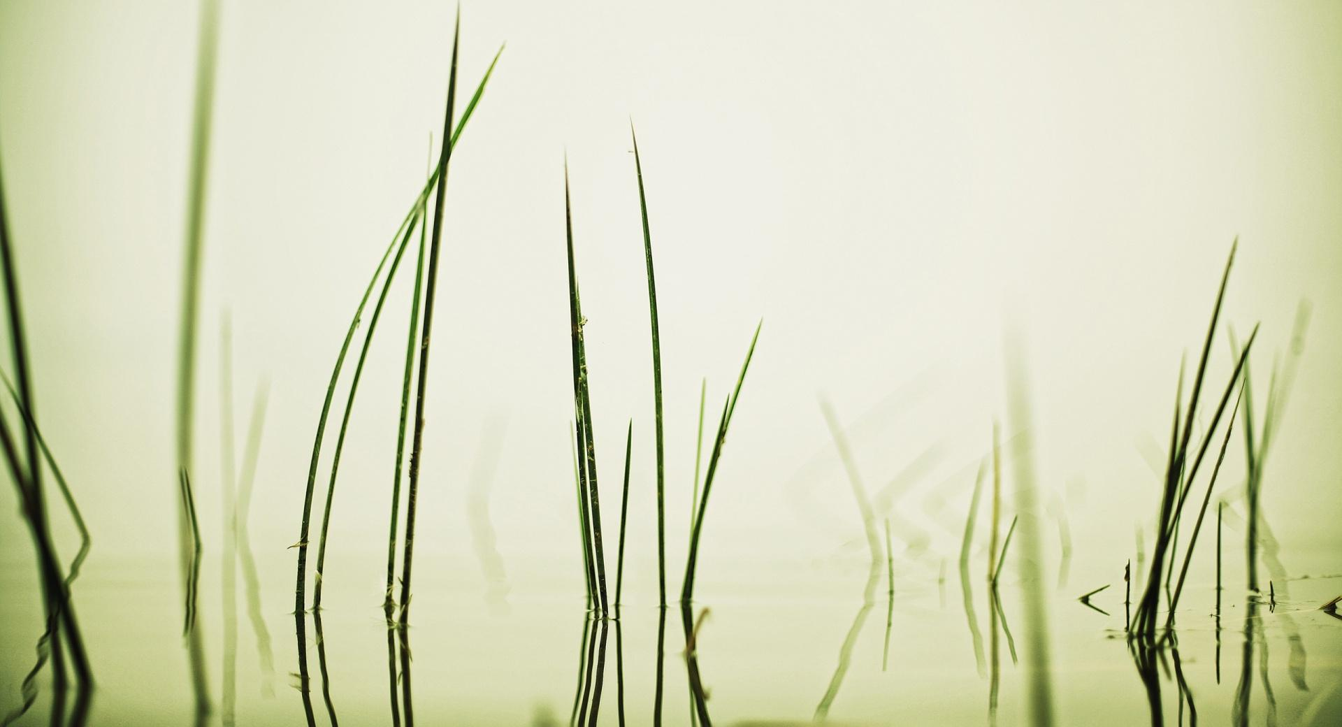 Water Grass wallpapers HD quality