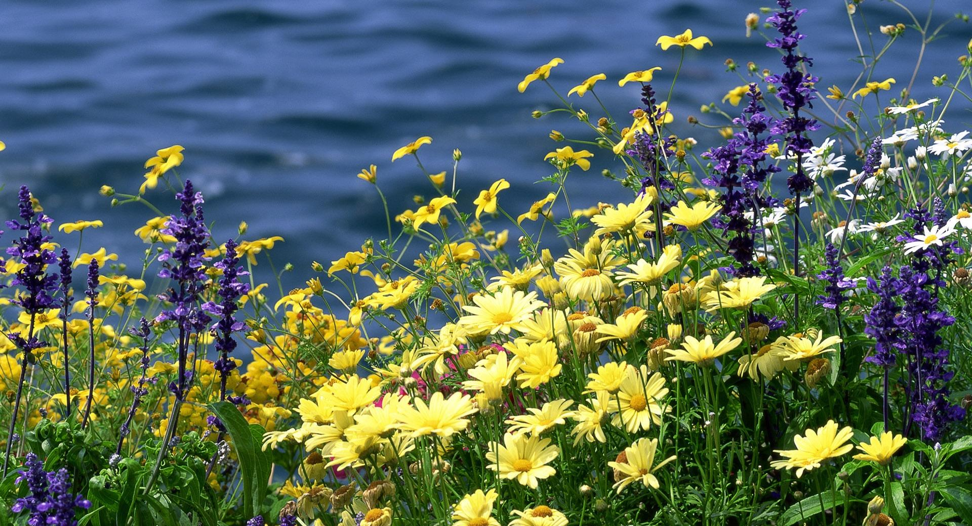 Wild Flowers And River wallpapers HD quality