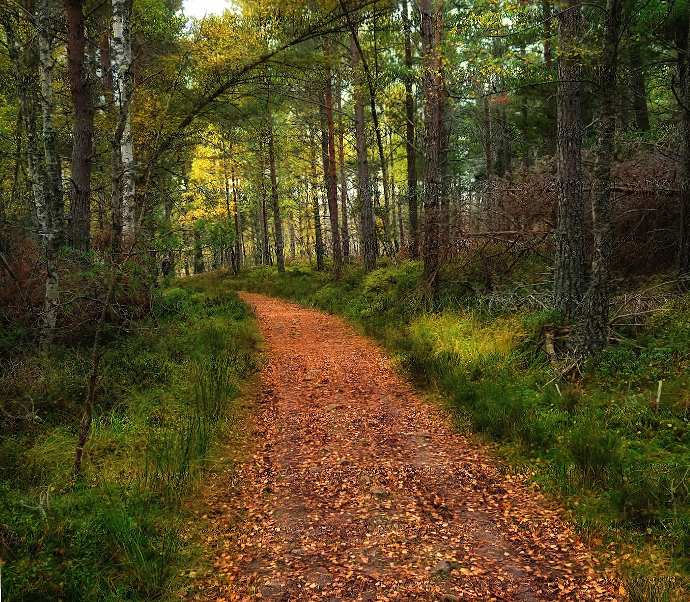 Woodland path wallpapers HD quality