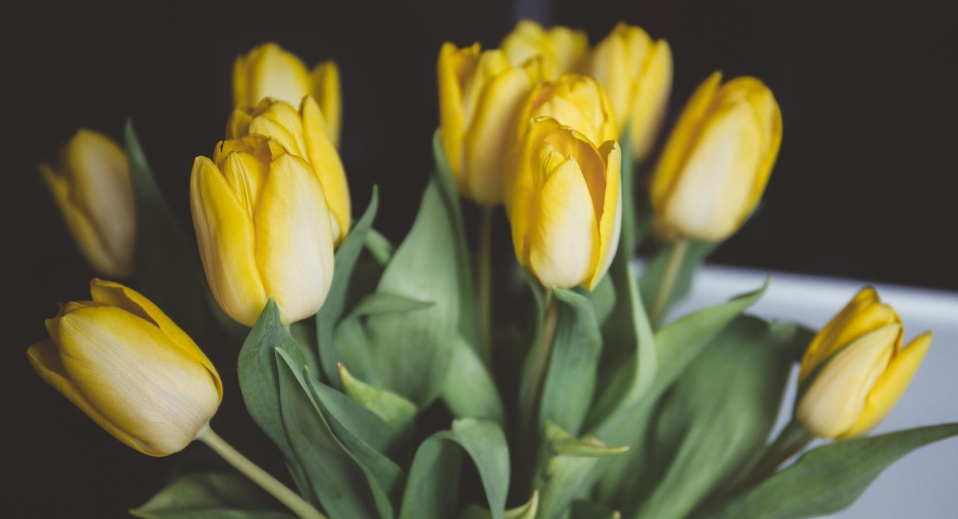 Yellow Tulips Bouquet wallpapers HD quality
