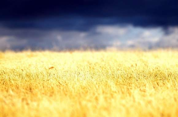 Beautiful Crop Field wallpapers hd quality