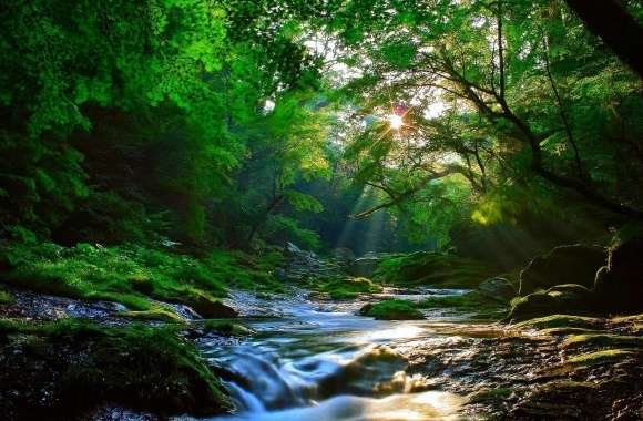Beautiful Sunlight at Forest wallpapers hd quality