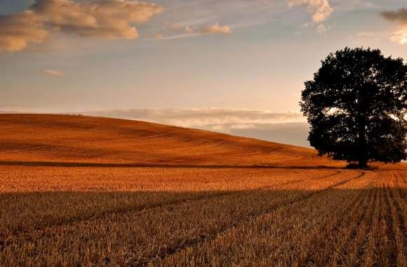 Lone Tree In Field, Autumn