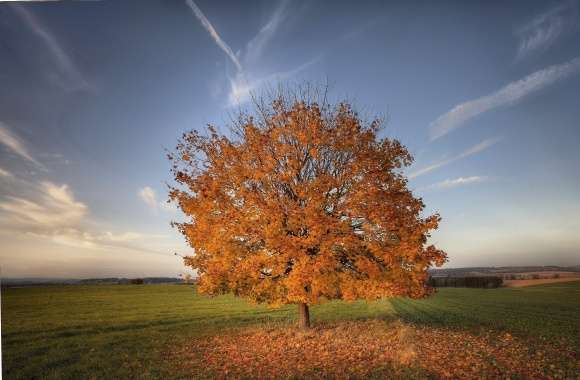 Lonesome autumn tree losing its leaves on the field wallpapers hd quality