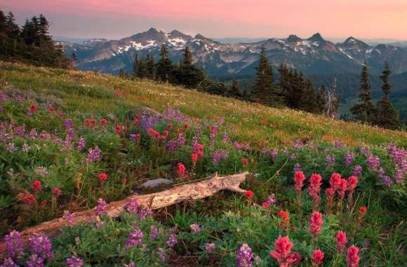 Tatoosh Range Mount Rainier Washington