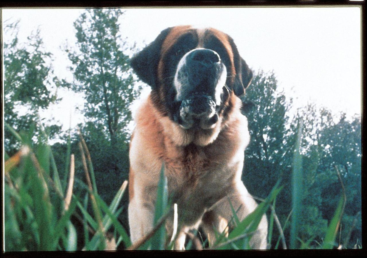 Cujo wallpapers HD quality