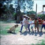 The Sandlot free download