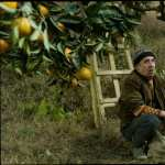 Tangerines hd wallpaper