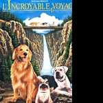 Homeward Bound The Incredible Journey hd