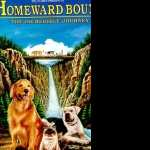 Homeward Bound The Incredible Journey download wallpaper